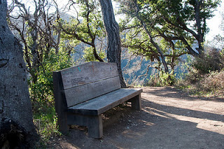 Benched (Friday Fiction)